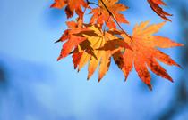 秋燥时节 如何正确对抗秋燥